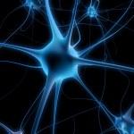 Neuron cell — Stock Photo