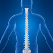 Human spine - Stock Photo