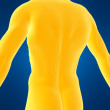 Male back - 