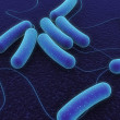 Coli bacteria — Stock Photo