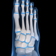 Skeletal foot - Stock Photo