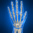 Foto Stock: Skeletal hand