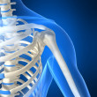 Skeletal shoulder — Foto Stock #2898273