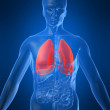Highlighted lung — Stock Photo #2898404