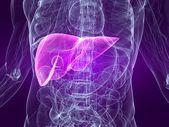 Human liver — Stock Photo