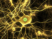 Nerve cells — Stock Photo