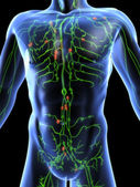 Lymphatic system — Stock Photo