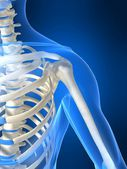 Skelettet axel — Stockfoto