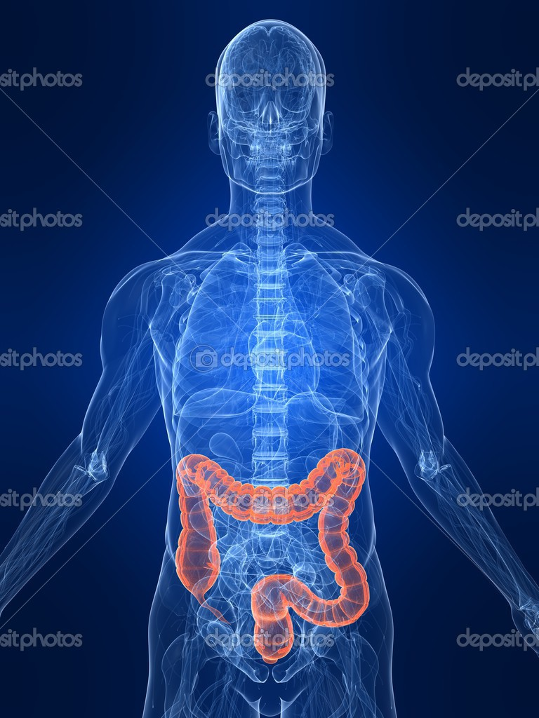 3d rendered illustration of transparent human body with highlighted colon — Stock Photo #2893592