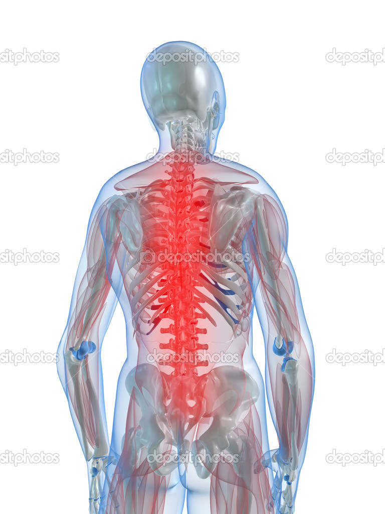 3d rendered illustration of a human skeleton with highlighted spine — Stock Photo #2896121