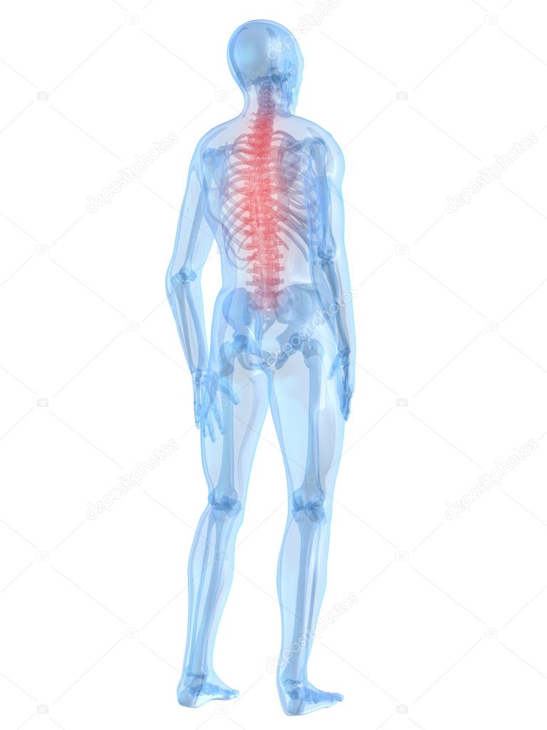 3d rendered illustration of a human skeleton with highlighted spine — Stock Photo #2896140