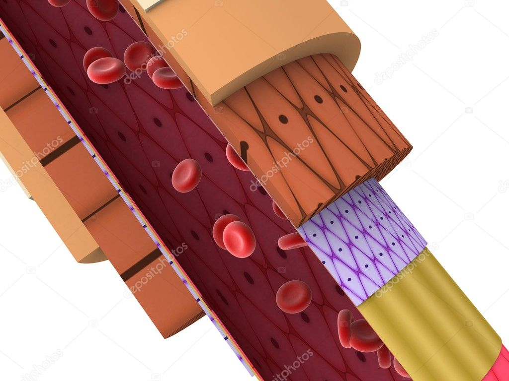 3d rendered illustration of an artery cross section  Stock Photo #2896394