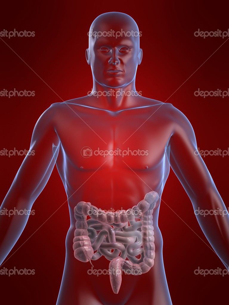 3d rendered illustration of a human body shape with intestines — Stock Photo #2897921