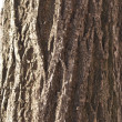 Bark — Stock Photo #2808790