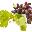Grapes — Stock Photo #3886063