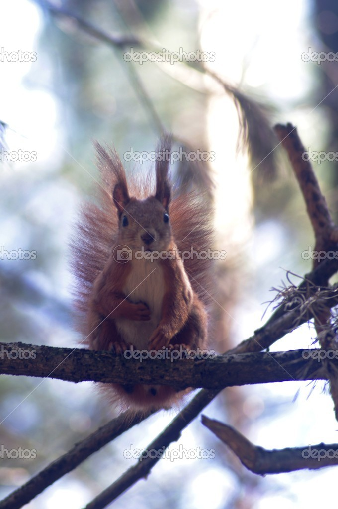 Squirrel — Stock Photo #2976303