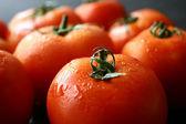 番茄果实 — 图库照片