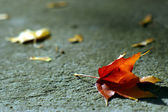 Grungy background with autumn leaf — Stock Photo