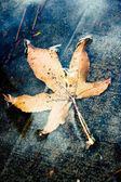 Bir su birikintisi içinde sarı sonbahar yaprak — Stok fotoğraf