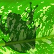Royalty-Free Stock Photo: The shadow of frog