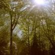 The forest lightbeam — Stock Photo