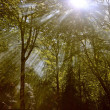 Stock Photo: The forest lightbeam