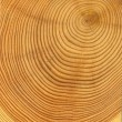 Wooden cut texture — Stock Photo #3334179