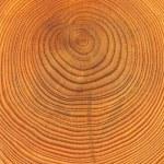 Wooden cut texture — Stock Photo