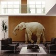 elefante indoor — Foto Stock