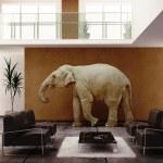Слон Крытый — Стоковое фото
