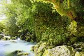 Густой лес — Стоковое фото