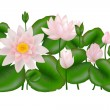 Group of Lotuses, Isolated on white — Stock Vector