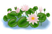 Group Lotuses with leaves — Stock Vector