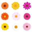 Stock Vector: colorful daisies