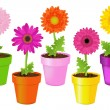 Colorful Daisies In Pots — Stock Vector