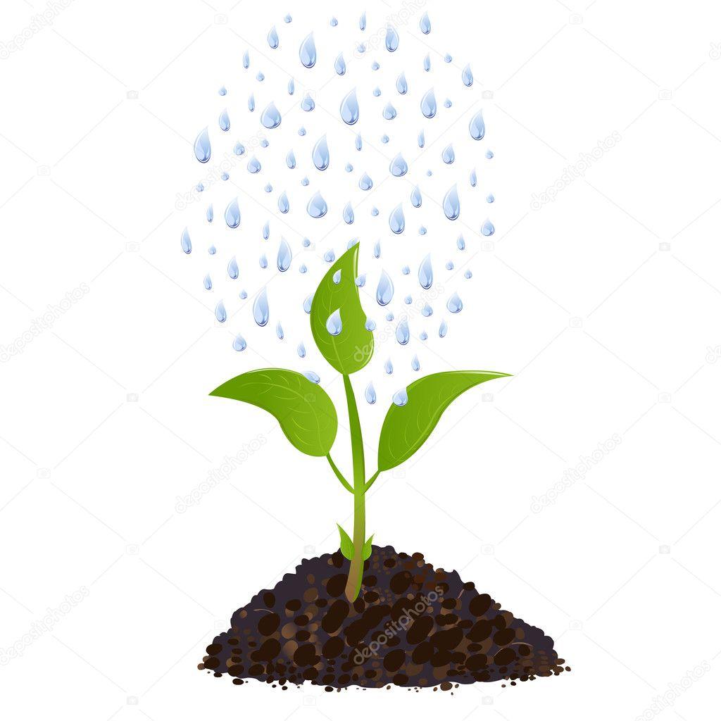 Рисунок растения в жизни человека 5