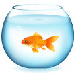 Постер, плакат: Goldfish In Aquarium