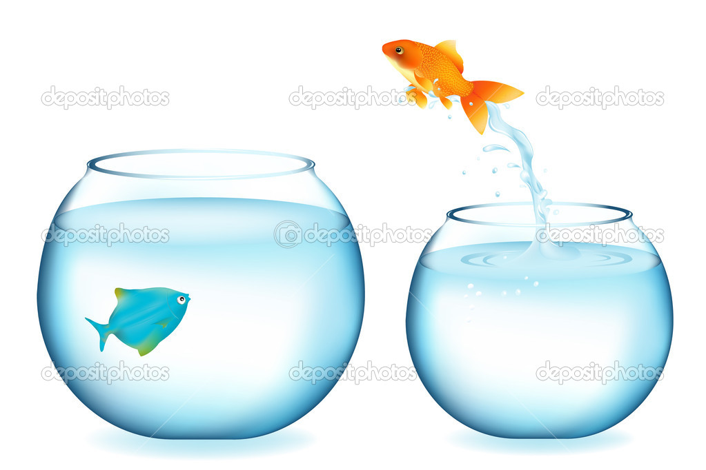 Golden Fish Jumping To Other Fish, Isolated On White — Stock Vector #2997165