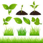 Green Spring Elements Set — Stock Vector
