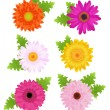 6 Colorful Daisies With Leaves — Stock Vector