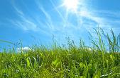 Erba verde con cielo blu e nuvole bianche — Foto Stock