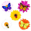 Vector Set Of Insects On Daisies — Stock Vector