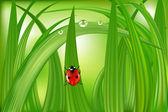 在绿色草地上的瓢虫 — 图库矢量图片