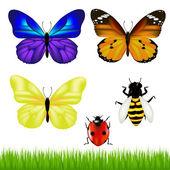Zestaw motyle — Wektor stockowy