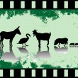 Old filmstrip with animals — Stock Vector