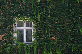 Window and grapes — Stock Photo