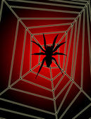 Spider On Web — Stock Photo