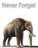 Elephant That Never Forgets — Stock Photo