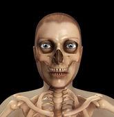 Skull And Flesh — Stock Photo