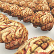 Many Brains — Stock Photo #3390801